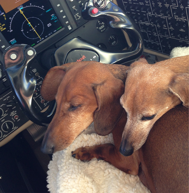 Tips for flying your pet on aircraft